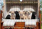 Liebenswerter Labrador 2020 (Wandkalender 2020 DIN A4 quer)