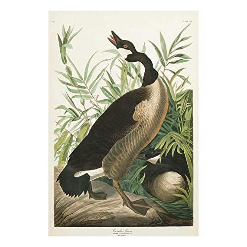 Bilderwelten Impression sur Verre - Vintage Board Canada Goose 120x80cm