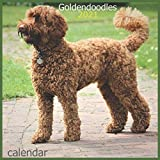 Goldendoodles: 2021 dogs Wall Calendar by Pub Print, 12 Month 8.5 x 8.5