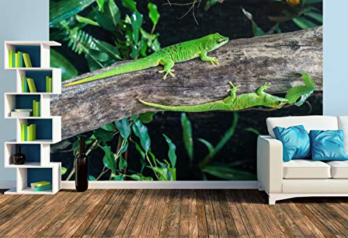 Premium Foto-Tapete Großer Madagaskar Taggecko/Phelsuma madagascariensis (versch. Größen) (Size L   372 x 248 cm) Design-Tapete, Wand-Tapete, Wand-Dekoration, Photo-Tapete, Markenqualität von ERFURT