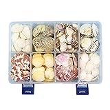 1 Caja de 8 Estilos Mezcla de Conchas Naturales Conchas de mar Cuentas DIY Estilo Marino decoración de Playa artesanías hogar Tanque Adorno de Acuario