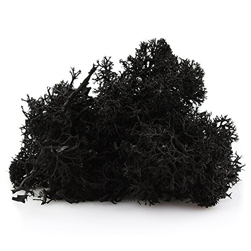 Black Colored Preserved Reindeer Moss - 2 oz - Indoor Outdoor for Potted Plants, Terrariums, Fairy Gardens, Arts and Crafts or Floral Decor Design