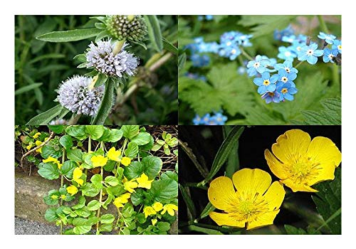 gemischtes Pflanzensortiment Pflanzen
