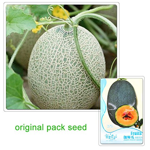 12 particules/Sac emballage d'origine Graines Jiashi Melon Graines Fruit Graines