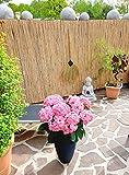 Schilfrohrmatte 90x600 cm - Natur Wind und Sichtschutzmatte aus Schilfrohr für Haus, Garten und Balkon