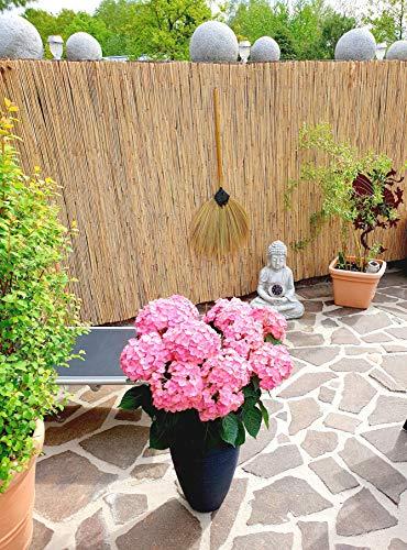 Schilfrohrmatte 80x600 cm - Natur Wind und Sichtschutzmatte aus Schilfrohr für Haus, Garten und Balkon