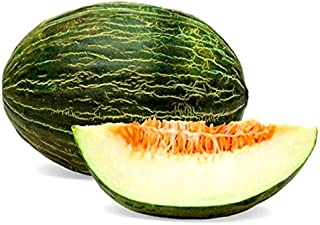 15+ ORGANICALLY Grown Spanish Piel de Sapo Melon Seeds, Heirloom Non-GMO, a.k.a. Santa Claus Melon, Super Sweet and Fragrant, Productive and Dependable, from USA