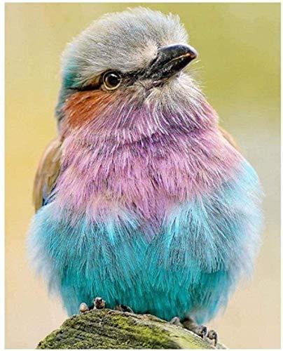 Xhabbaa 5D Completo Grande Pintura De Diamantes Animal Pájaro Mosaico Punto De Cruz Cristal Redondo Establece Bordado Decorativo 40X50Cm(16X20 Pulgadas)