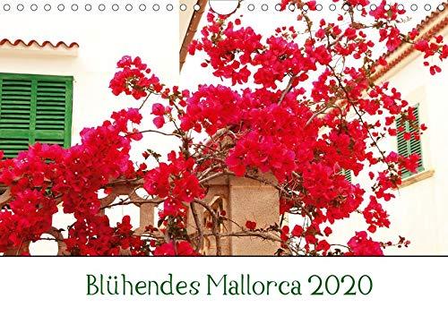 Blühendes Mallorca 2020 (Wandkalender 2020 DIN A4 quer): Mallorca fasziniert mich immer wieder aufs Neue mit seiner Flora und Fauna. (Monatskalender, 14 Seiten ) (CALVENDO Natur)