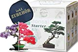 valeaf Bonsai Starter Kit - SUMMER SALE - Züchten Sie Ihren eigenen Bonsai Baum - Anzuchtset inkl. 4 Sorten Bonsai Samen & Zubehör - für Anfänger - das ideale Geschenk zum Baum pflanzen