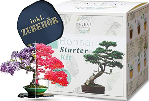 valeaf -   Bonsai Starter Kit