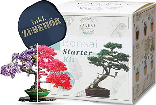 valeaf Bonsai Starter Kit - Summer Sale - Cultiva tu propio árbol...