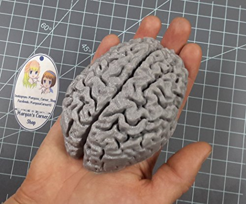 Human Brain (Mega) Plastic Mold Resin Mold, Brain Mold, Clay Mold, soap Mold, Wax Mold, Anatomy Mold, Human Mold, Bath Bomb Mold