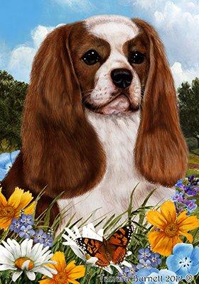 Best of Breed Cavalier King Charles Blenheim - pavillons de jardin de fleurs d'été