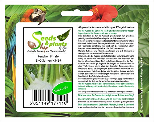 Stk - 25x Fenchel, Finale EKO- Fenchel Samen Gemüse KS497 - Seeds Plants Shop Samenbank Pfullingen Patrik Ipsa