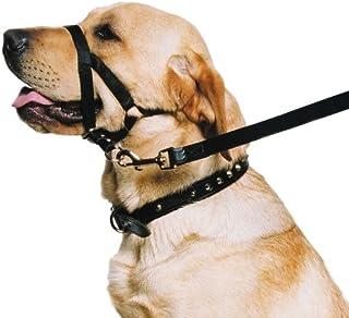 Ancol Ronzal de Entrenamiento para Perro