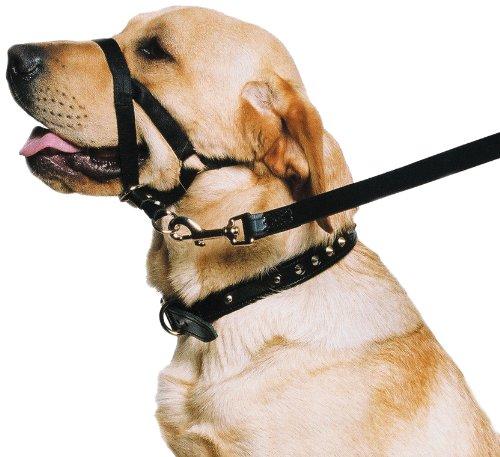 Ancol Hunde-Trainingshalfter, Halsband