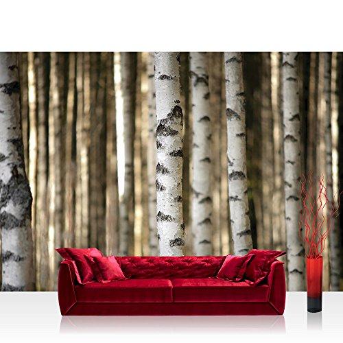 Fototapete 368x254 cm PREMIUM Wand Foto Tapete Wand Bild Papiertapete - Wald Tapete Bäume Birken Wald weiß - no. 2553