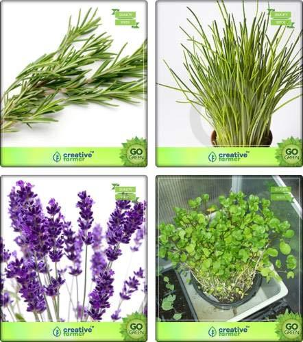 Seedsown hierba Combo romero, ajo cebollino, lavanda, Semillas de hierbas Berro Combo Pack Por de semillas