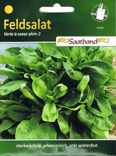 Feldsalat Verte a`coeur plein 2 Saatband Salat winterfest