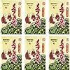 沖縄産 くみすくちん茶ティーバック (4g×32p)×6箱