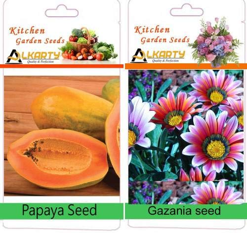 ShopMeeko SEED Gazanien Samen, Papayasamen Seed (20 pro Paket)