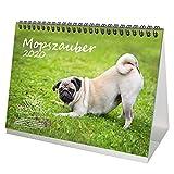 Mopszauber DIN A5 Tischkalender 2020 Mops Hunde und Welpen Geschenk-Set: Zusätzlich 1 Gruß- und 1 Weihnachtskarte - Seelenzauber