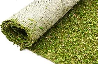 bdcrafts Moss Runner Green 18''w X 12ft Long