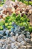 Antica Torroneria Piemontese Tartufo italienische Trüffelpralinen in verschiedenen Sorten 140 g Pralinen Trüffel Schokoladentrüffel (Tartufo 10 Sorten gemischt)