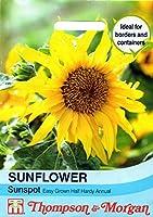 【輸入種子】 Thompson&Morgan SUNFLOWER Sunspot サンフラワー(ひまわり)・サンスポット  トンプソン&モーガン