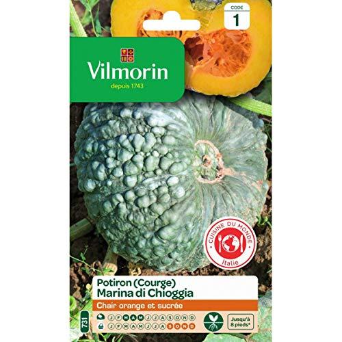 Vilmorin - Sachet graines Courge Marina di Chioggia