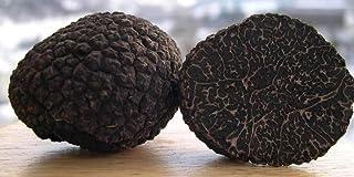 Black Truffle Mycelium Seeds Spores Mushroom Fungus Live Tuber melanosporum 30 g