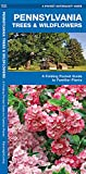 Pennsylvania Trees & Wildflowers: A Folding Pocket Guide to Familiar Plants (Wildlife and Nature Identification)