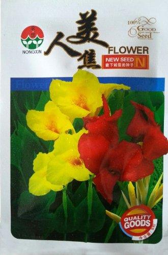 5 graines / Paquet rares Graines Fleur La Double Couleur Canna, Hauteur 100-150cm, Fleur dia 20cm Inde Tir graines de fleurs pour le jardin