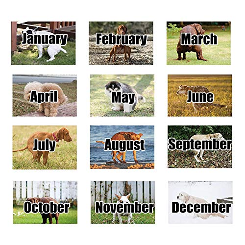 Kackende Hunde Kalender 2021 Lustige Hunde Wandkalender 2021 Kalender Planen für Hundeliebhaber Hundebesitzer
