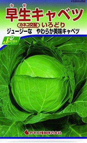 カネコ種苗 野菜タネハイクオリティ252 早生キャベツ いろどり 10袋セット