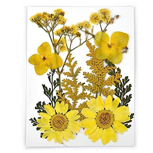 TJYEDUW 1 paquete de plantas secas de flores secas reales para rellenar moldes de resina de resina con colgante de collar para hacer joyas de uñas (color: flor seca 35)
