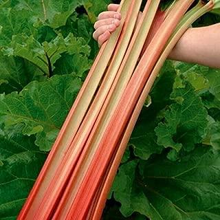 HOT - Ukrainian Organic Vegetable Rhubarb Seeds