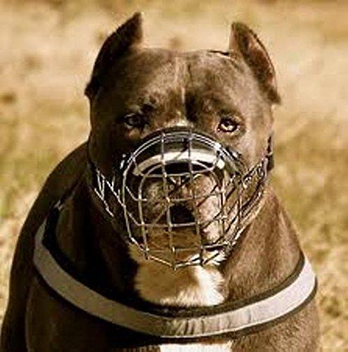 Museruola a cestino in filo metallico per Amstaff, Pitbull, Bull Terrier