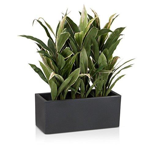 Pflanzkübel DECORAS Kunststoff Pflanztröge – versch. Größen – anthrazit – frostsicher & UV-beständig – TÜV-geprüfte Qualität – Premium Blumenkübel