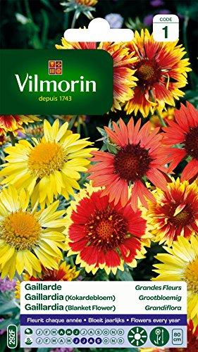 Vilmorin 5271241 Gaillarde variée à grande fleur, Multicolore, 90 x 2 x 160 cm