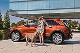 LFNSTXT Rompecabezas para adultos, 1000 piezas, Cadillac Dogs XT D Launch Edition Sport Jigsaw Puzzle para adultos, familias y niños. Juego educativo de juguete para decoración del hogar (70 x 50 cm)