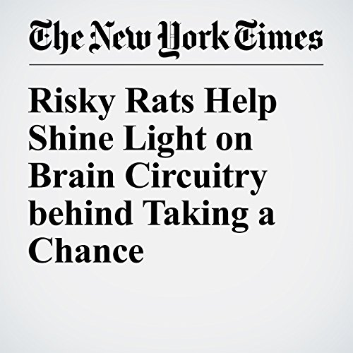 Risky Rats Help Shine Light on Brain Circuitry behind Taking a Chance audiobook cover art