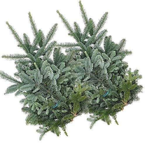 Pflanzen Kölle Nobilis Tannenzweige Handbund, Abies nobilis, je ca. 2,5 kg, 2er-Set