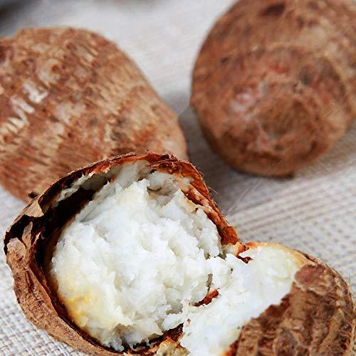 DaDago 100 Teile/Beutel Taro Samen Seltene Grüne Riesen Taro Samen Erbstück Macrorrhiza Mehrjährige Zierblätter Essbare Wurzelgemüsesamen