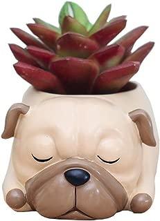 pug succulent planter