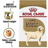 Royal Canin 453735Labrador Retriever Adult Breed Specific Dry Dog Food, 30 lb. bag