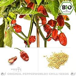 Pepperworld NuMex Suave Red Bio Chili-Saatgut, 10 Korn, Chili-Schote zum Anpflanzen, fruchtig und mild