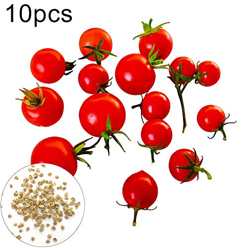 lamta1k Honig Tomatensamen, 10 Stück süße Honig Tomatensamen Essbare Gemüselebensmittel Hausgarten Bonsai Pflanzen Tomato Seeds