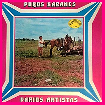 Puros Gabanes